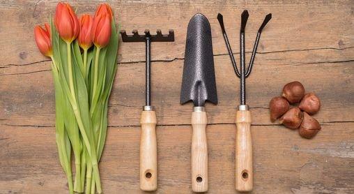Online Shop Pflanzen Mauk Erlebnis Gartencenter