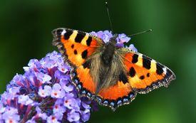 Der Nektargarten: Eine idyllische Oase im heimischen Garten
