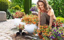 Gartenkalender: Gartenarbeiten im Mai