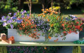 Balkone sommerlich bepflanzen
