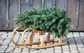 Welcher Weihnachtsbaum passt zu mir?