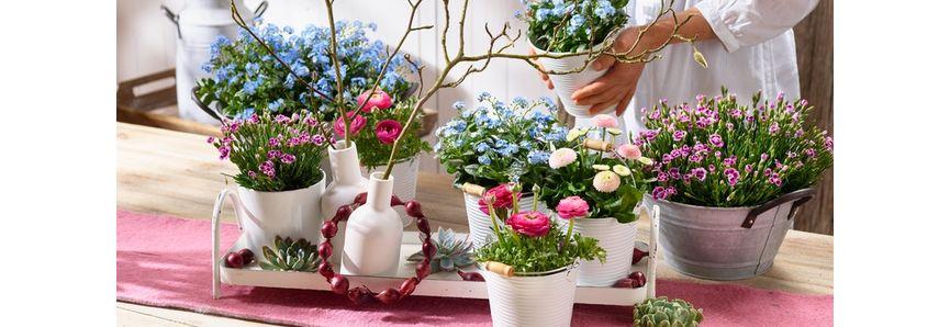 Ratgeber Pflanzen Mauk