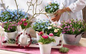 Leuchtende Blüten für den Frühlingstisch