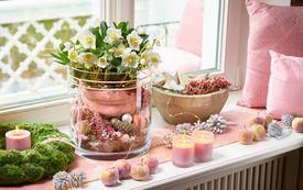 Blütenwunder Christrose