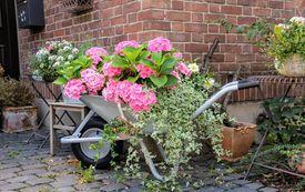 Gartenkalender: Gartenarbeiten im Juli