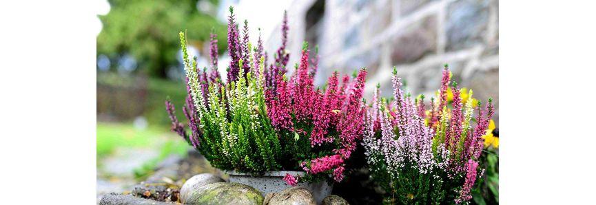 Gartenkalender Pflanzen Mauk