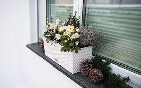 Deko-Tipp: Christrosen auf der Fensterbank