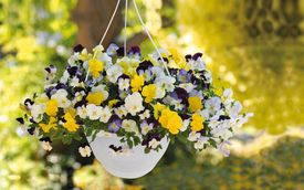 Paradiesische Blumenpracht mit Blumenampeln