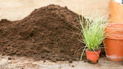 Sortiment Gartenbedarf Pflanzen Mauk Erlebnis Gartencenter